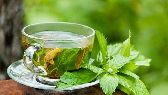 Contra la obesidad, plantas medicinales