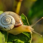 La baba de caracol como tratamiento de belleza